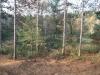 New Log Home Site